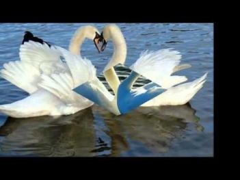 два белых лебедя рок острова скачать